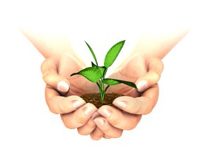 stock-footage-plant-growing-in-hands-on-white-background-with-luma-matte-you-can-choose-whatever-background-you